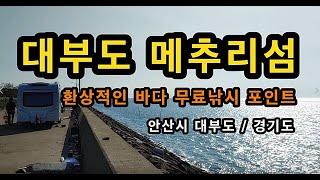 [안산]_ 대부도 메추리섬 / 무료 바다낚시 포인트 /…