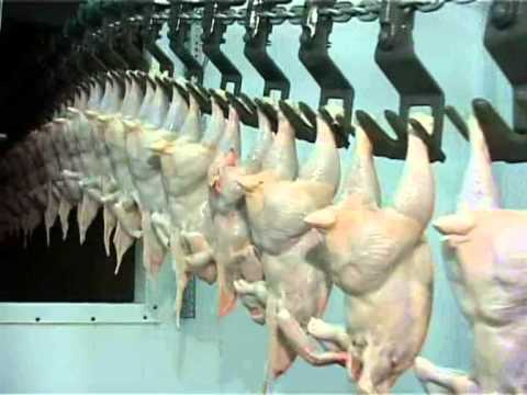Считается ли мясо курицы диетическим продуктом?