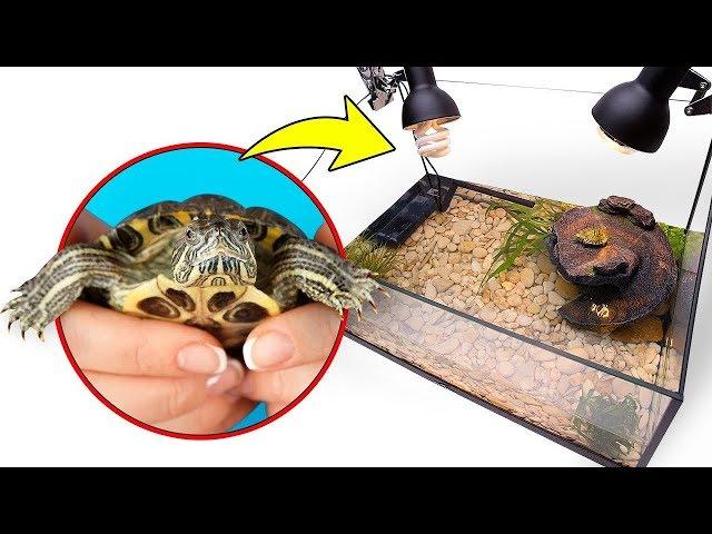 Montagem de terrário para duas lindas tartarugas-de-orelhas vermelhas