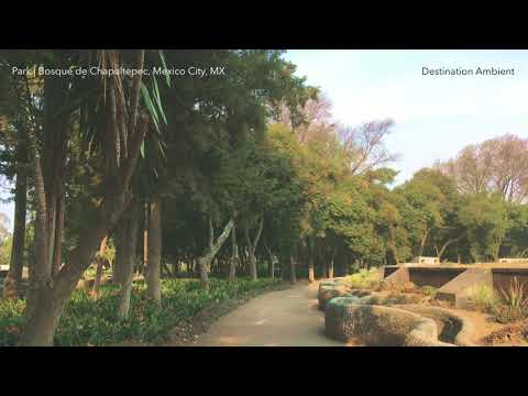 Park | Bosque de Chapultepec, Mexico City, MX