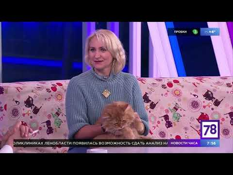"""Общаемся с кошками в """"Полезном утре"""""""