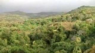 rainforest of el yunque puerto rico