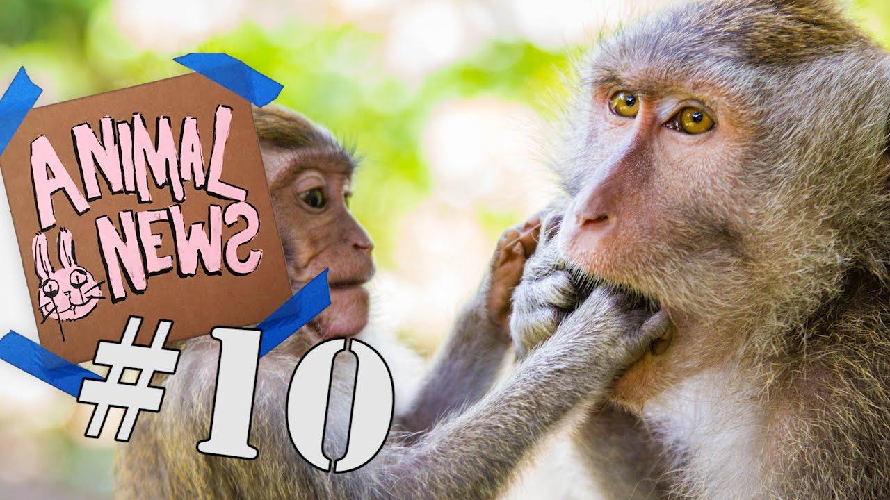 Animal News 10