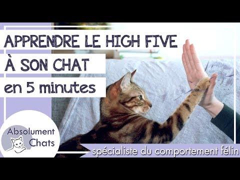 Apprendre Le High Five à Son Chat En 5 Minutes