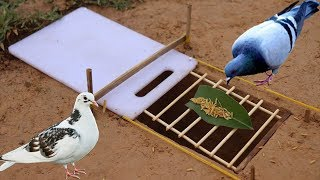 The First Unique Simple Bird Trap Make from Plastic Cutting Board - Best bird trap Technology