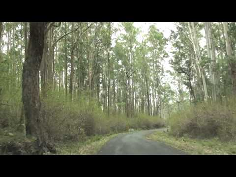 Satyamangalam Tiger Reserve - Road view video - Hasanur to Kollegal Route