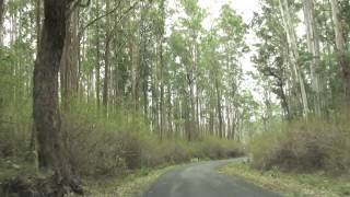 Satyamangalam Tiger Reserve - Road view video