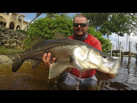 Kayak Fishing Monster Snook In Palm Beach County
