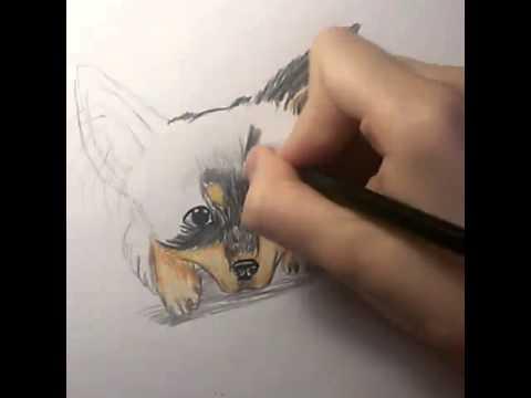 Рисование зверей