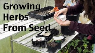Starting Herbs from Seeds