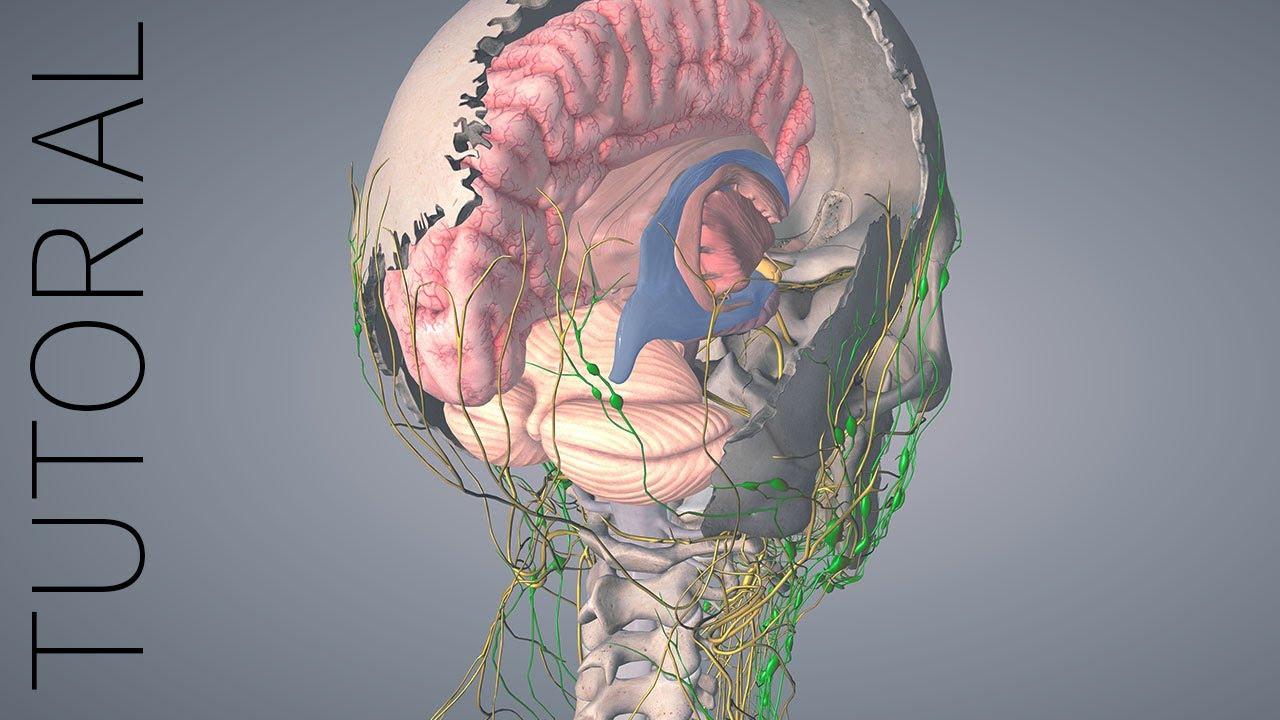 Pins - Essential Anatomy 5 Tutorial - YouTube