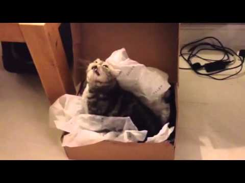 Funny Cat Has Sneezing Fit!