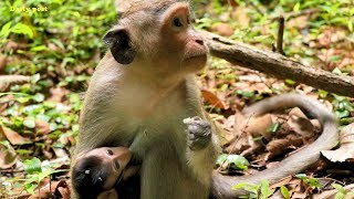 Casi Monkey Very Much Concern About Little Baby Tommy - First Baby Tommy,Casi Adores Him, Daily Post