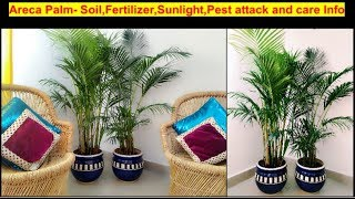 How to Grow Healthy and lush green Areca Palm-Soil, Fertilizers,sunlight,Pest attack and care info