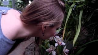 Весна в оранжереях Ботанического сада РАН (выставка ''Цветущая Азия'')