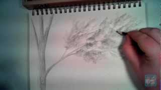How to Draw Realistic Looking Leaves