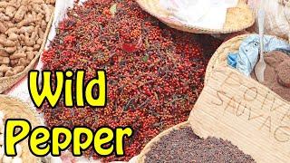 Votsiperifery Black Pepper (Piper Borbonense) - Weird Fruit Explorer Ep 377