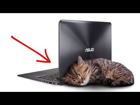 Asus по цене MacBook и лучше MacBook? Реально?