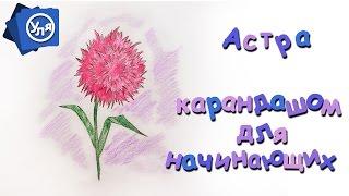 Как нарисовать астру // Как нарисовать цветок карандашом для начинающих