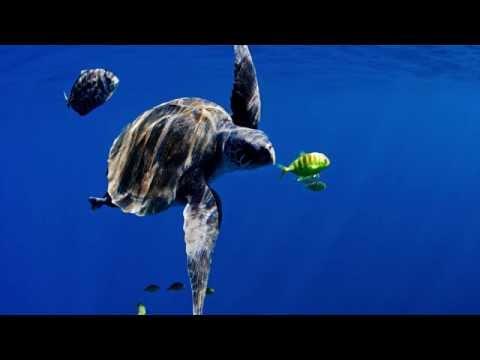 Oceans will keep us alive - if we let them | Manuel Marinelli | TEDxKlagenfurt