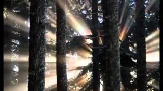 Macaco - Somos Luz