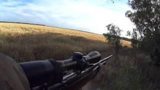 Riflemen in the bush