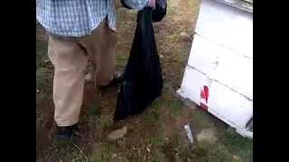 Garbage bag full of bees!