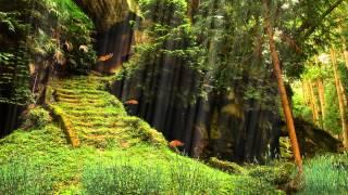 Футаж лес