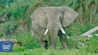 Full Documentary: African Elephants