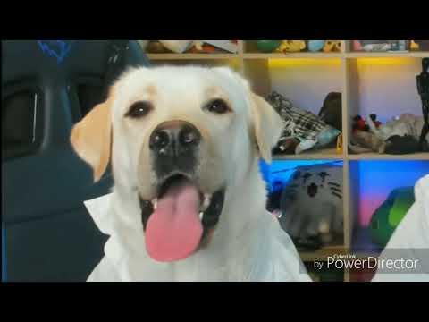 Рэп собаки \
