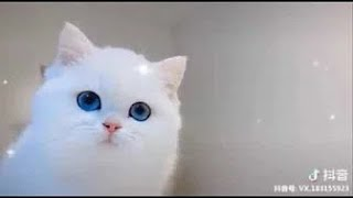 Cute Baby Animals Compilation Cute Moments