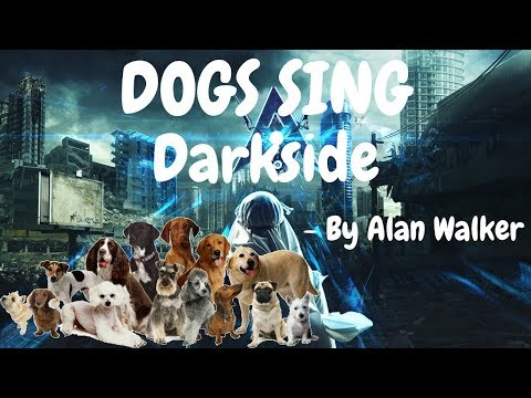 Dogs Sing Darkside by Alan Walker feat. Tomine Malmquist Harket & Au/Ra   Dogs Singing Song Series