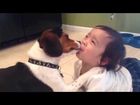 Ultimate Animal Reactions & Bloopers of 2019 Funny Pet Videos