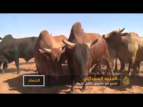 الجنيه السوداني.. تراجع غير مسبوق أمام الدولار