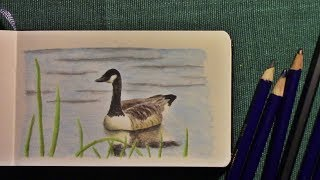 drawing in my sketchbook 04 - a canada goose