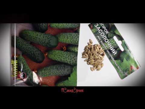 Семена Огурец Засолочный профпакет - Помидорчик