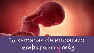 16 semanas de embarazo - Cuarto mes - EMBARAZOYMAS