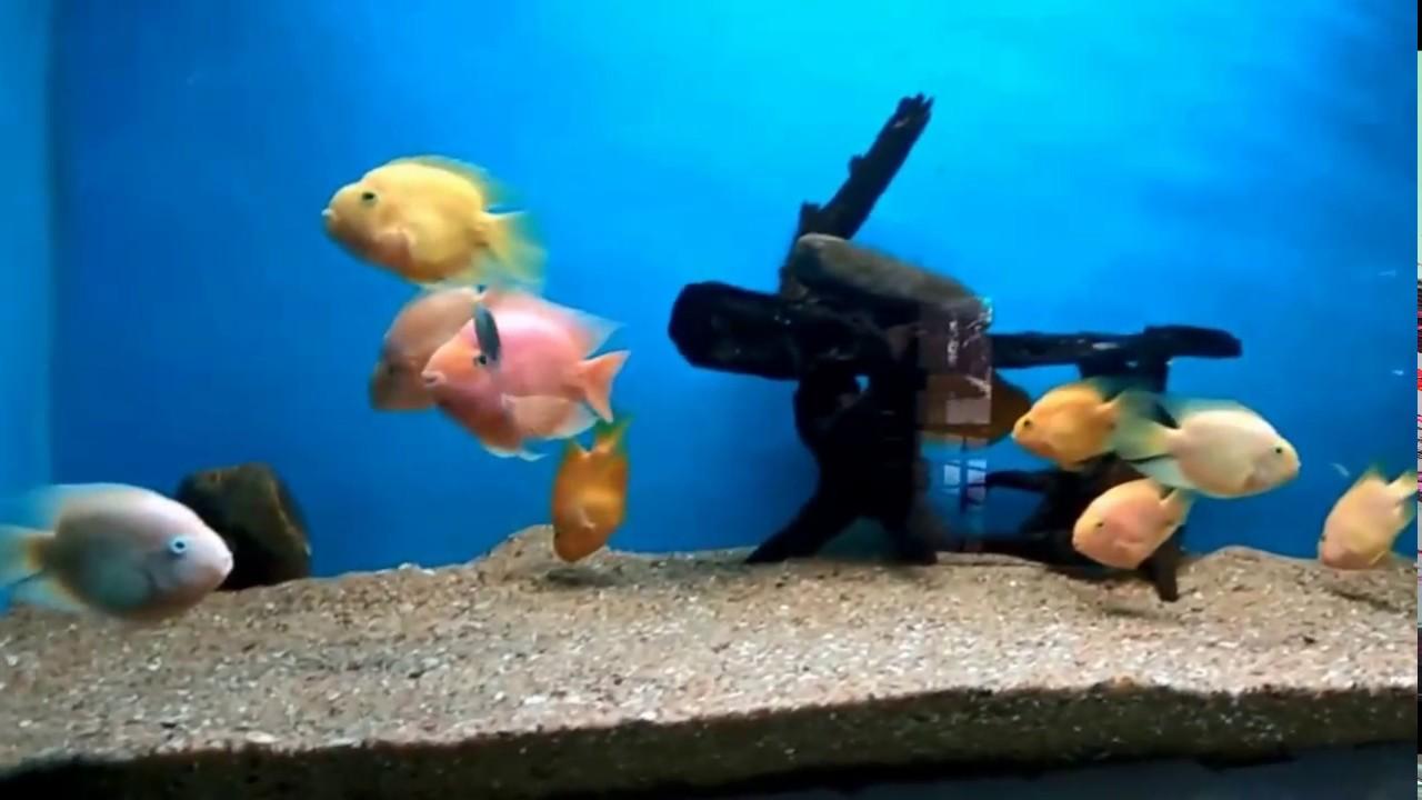 Fish for aquarium in bangalore - Second Largest Aquarium In India Bangalore
