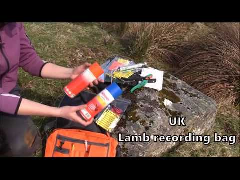 Tips & Tricks Lamb recording bag UK