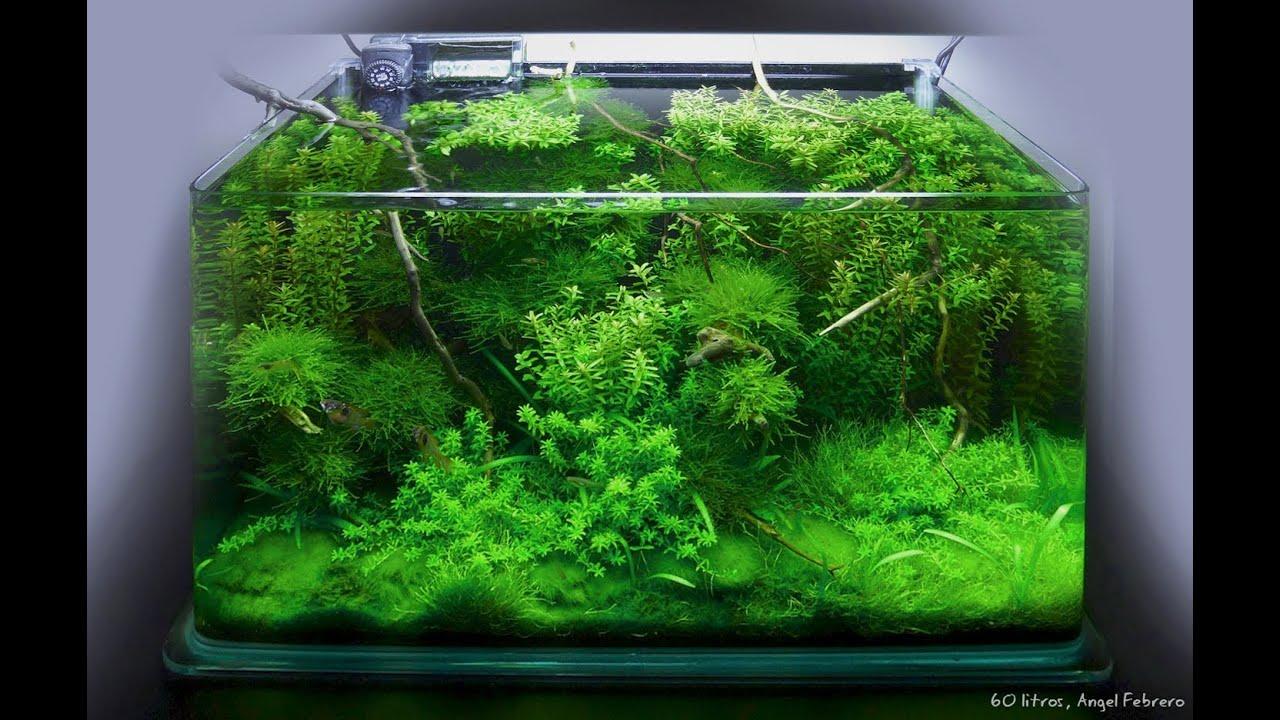 Biobricolaje 1 montaje de un acuario de agua dulce - Montaje de acuarios ...