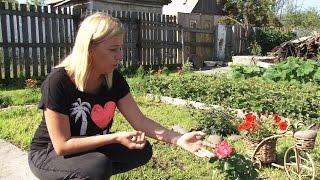 Молодые семьи предпочитают отдыхать в саду(Работа в саду, как правило, отнимает силы и время. Однако героиня нашего сюжета Елена Иванчикова приобрела..., 2015-08-10T12:19:37.000Z)