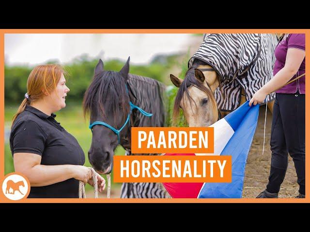 Ontdek het karakter van jouw paard door de PARELLI HORSENALITY methode   Introvert vs Extrovert