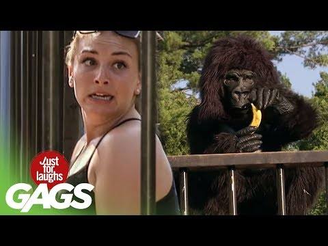 Youtube filmek - Harambe The Gorilla Interrupts Photo Shoot - Just For Laughs Gags
