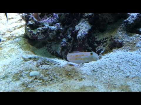 Starfish Tries to Steal Fish's Cave