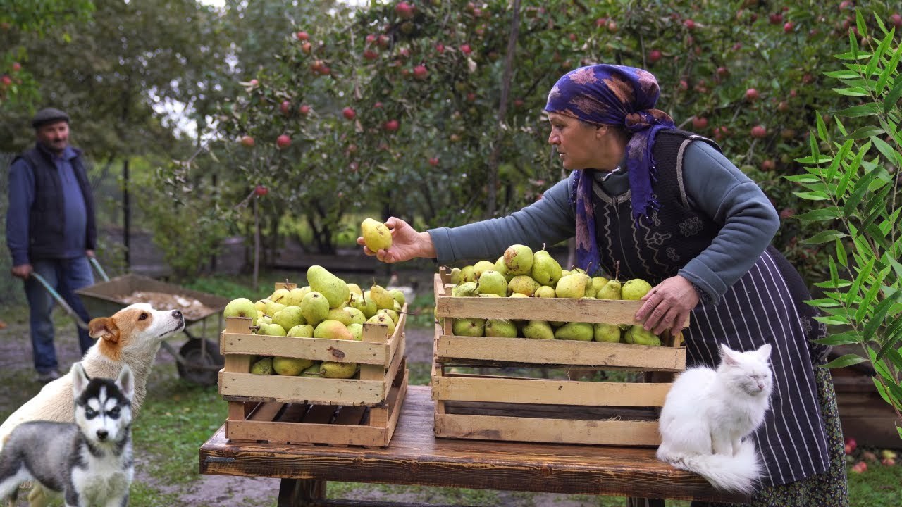 Download Harvesting Pears and Preserving for the Winter, Village Cooking Vlog