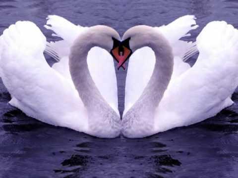 Frases De Amor Fuiste Mi Poesia Fuiste Mi Pasion Frases De Amor