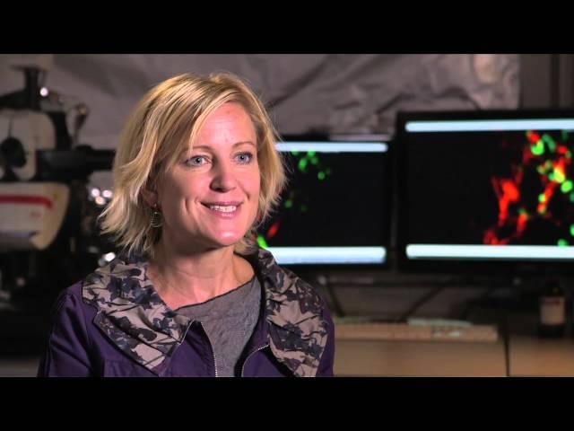 Bioengineer Melody Swartz: 2012 MacArthur Fellow | MacArthur Foundation