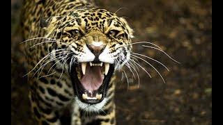 ТОП 10 САМЫХ СИЛЬНЫХ ЧЕЛЮСТЕЙ ЖИВОТНЫХ / TOP 10 STRONGEST BITE ANIMALS