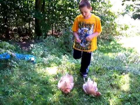 Chicken Whisperer Joshua McCarthy