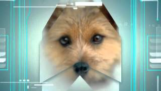 How To Train Norwich Terrier
